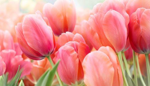 春のプチうつ、スッキリ!旬花セラピー