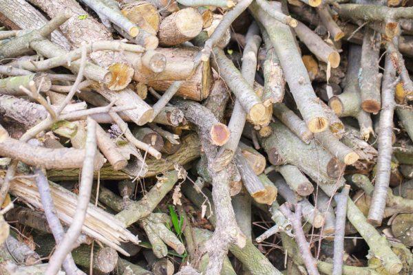 焚き火の薪にする枝