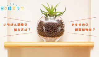 清潔・簡単!ハイドロカルチャーのメリットを最大限にいかして観葉植物を楽しむコツ