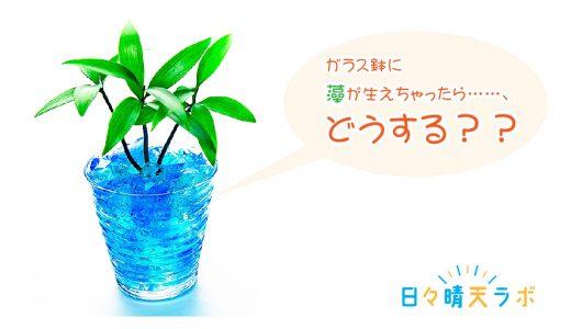 ハイドロカルチャーのガラス鉢に藻が生えた!その原因と対策とは?