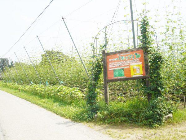 06遠野カッパ淵ホップ畑