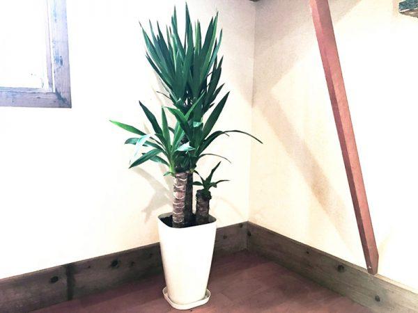 3大きい観葉植物の鉢
