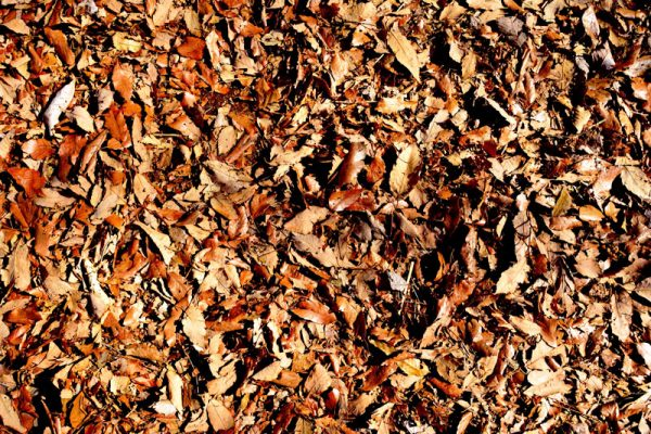 03プランター用土土壌