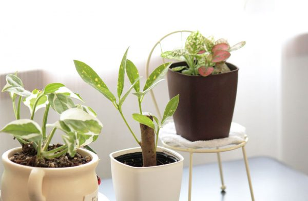 14観葉植物ミニ観葉