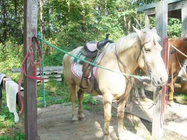11外乗後馬の手入れ