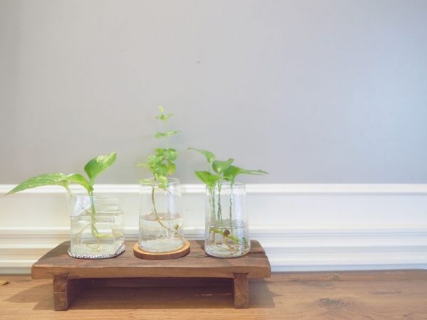 05観葉植物挿し芽
