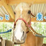 密にならずに遊ぶなら乗馬がおすすめ!初心者でも楽しめる外乗とは?